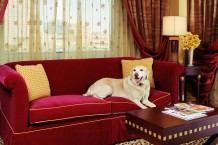 Hotel-Room-With-Dog